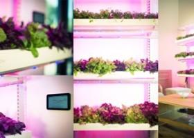 Kickstarter: Click & Grow Smart Farm