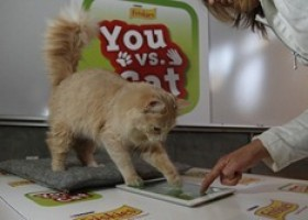 "Friskies Launches ""You vs. Cat"" Tablet Game"