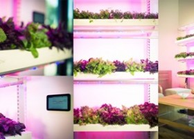 Kickstarter: Click & Grow Smart Farm